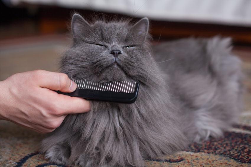 """Résultat de recherche d'images pour """"cat getting combed"""""""