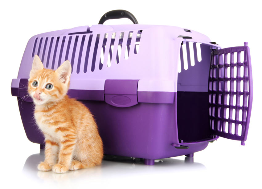 A cute little ginger kitten sitting next to a cat travel box