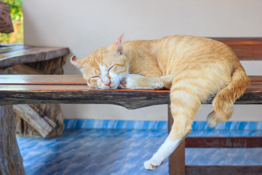 En rödvit katt sover inomhus
