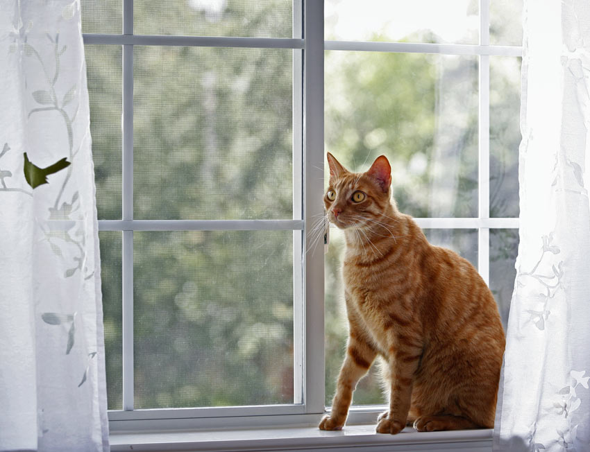 A ginger cat sat in front of a closed window