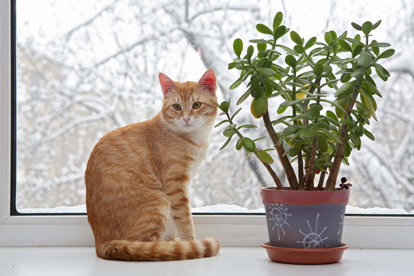 A ginger cat sitting next to an indoor plant