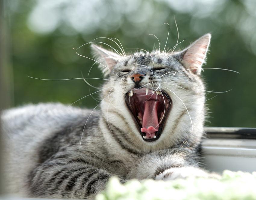 Hur Du Borstar Din Katts Tänder Ta Hand Om En Katt Katter