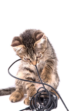 A kitten chewing on an electric cable