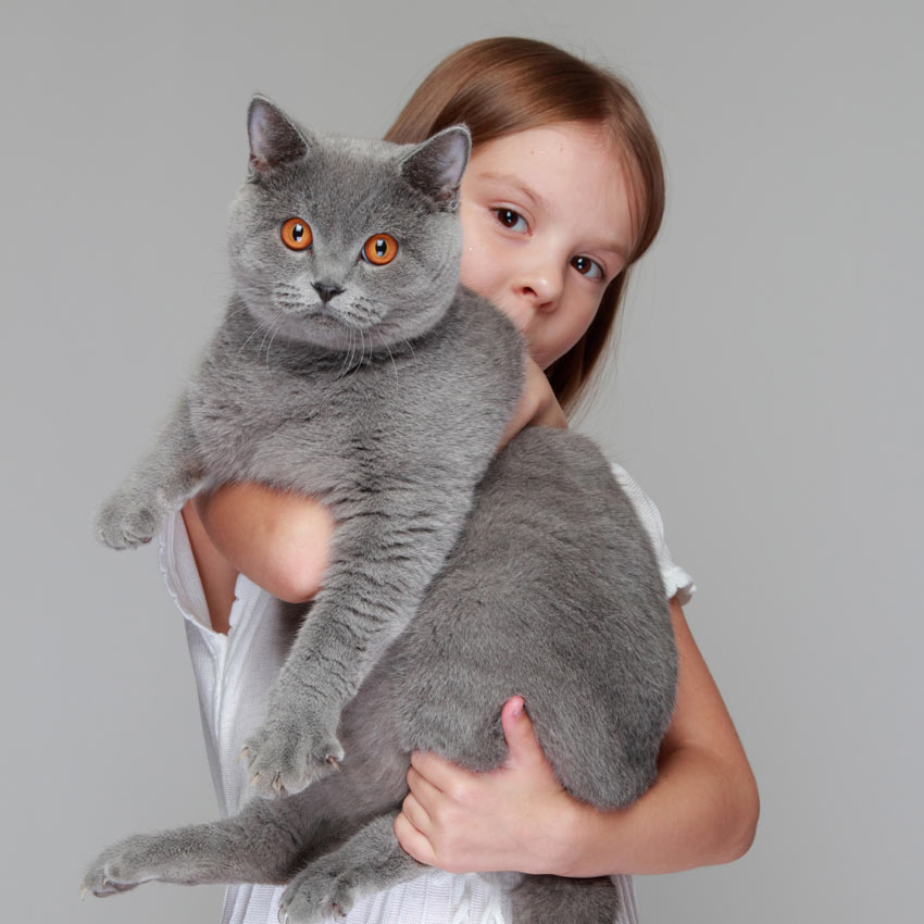 A little girl holding a cat