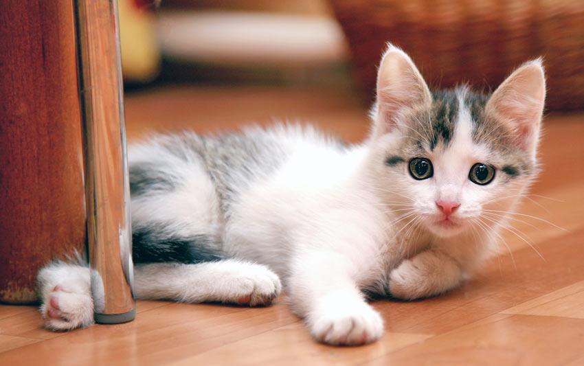 Ein junges Kätzchen, das schelmisch dreinschaut