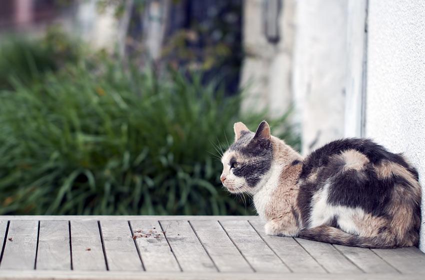 Eine dreifarbige Katze ruht sich auf dem Gartentisch aus