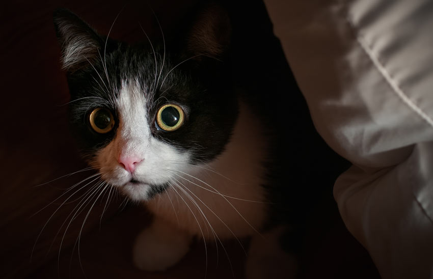 katt kisar med ena ögat