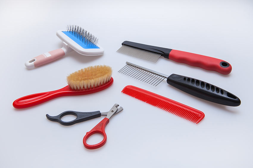 All the necessary cat grooming equipment