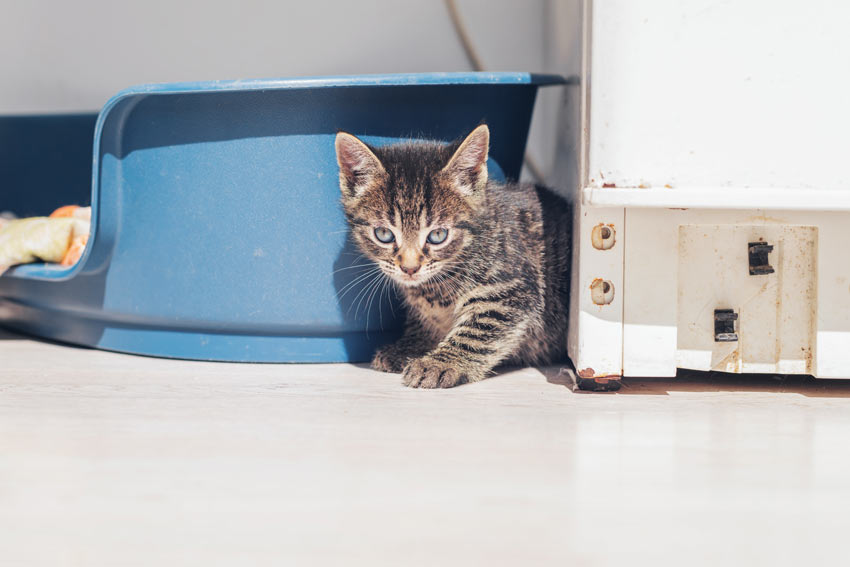 An adorable tabby kitten exploring her new surroundings
