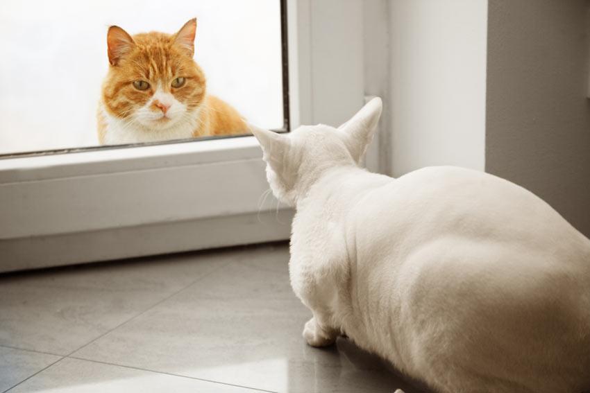 To katte møder hinanden for første gang igennem en glasdør