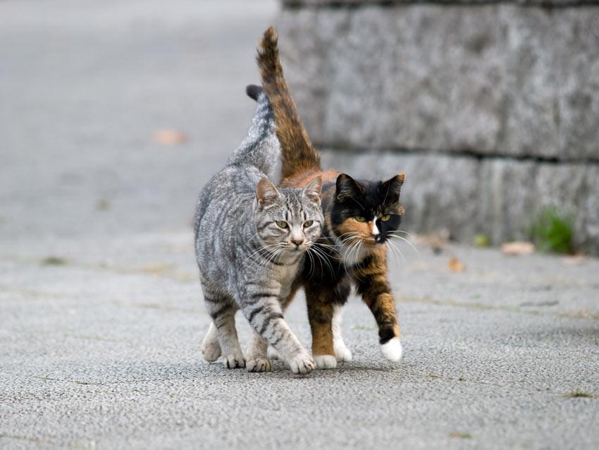 To katte i samme alder og med lignende temperament kommer godt ud af det med hinanden