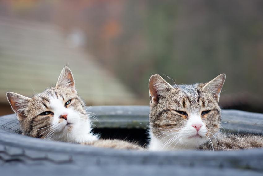To hunkatte er som søstre for hinanden