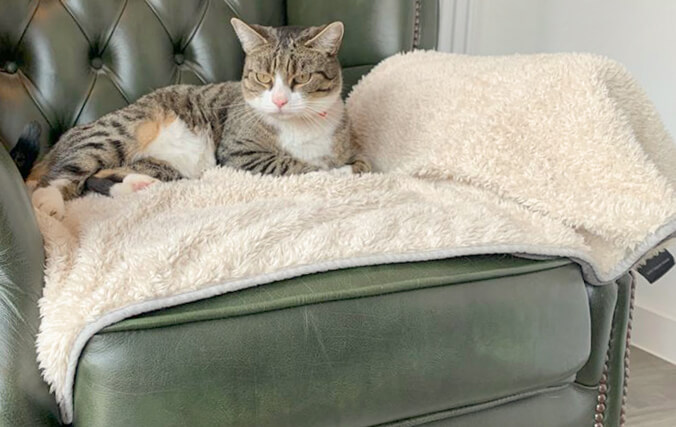 Place the blanket on your cat's favorite piece of furniture to protect from fur, dirt, and sharp claws.