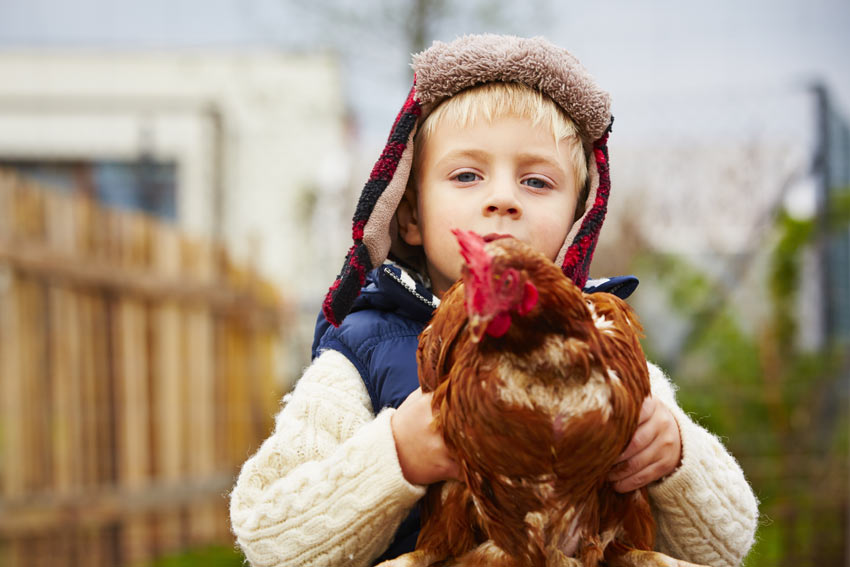 A young boy holding his beautiful, tame chicken