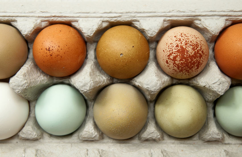 Ten beautiful chicken eggs each laying by a different chicken