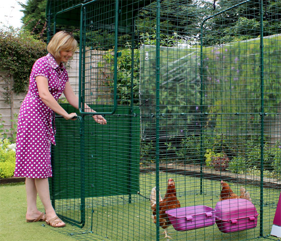 Una mujer abriendo la parte superior de la puerta del corral para gallinas.