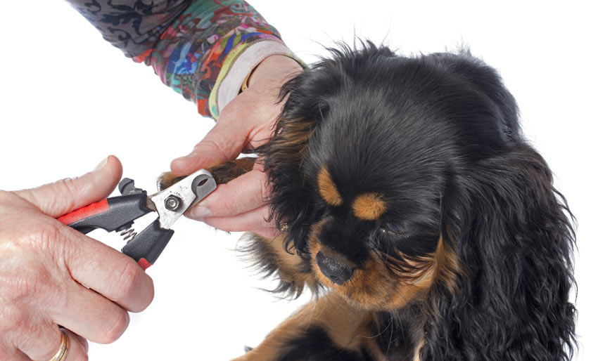 A dog having a good groom getting his nails clipped