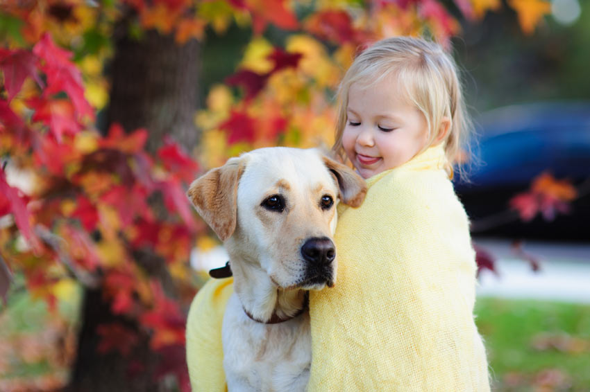 A Golden Lab getting on very well with its owners little child