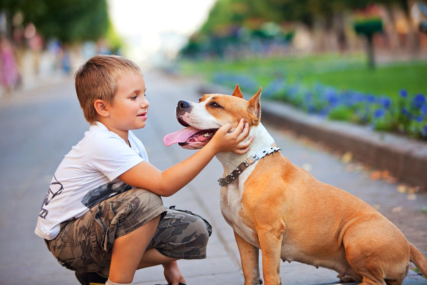 A lovely little dog sitting with a young boy