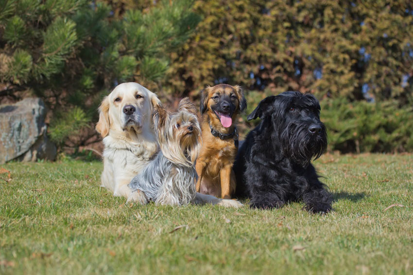 A selection of dog breeds each with different coat types