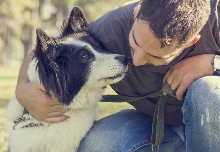 A wonderful and intelligent Collie enjoying its owners company
