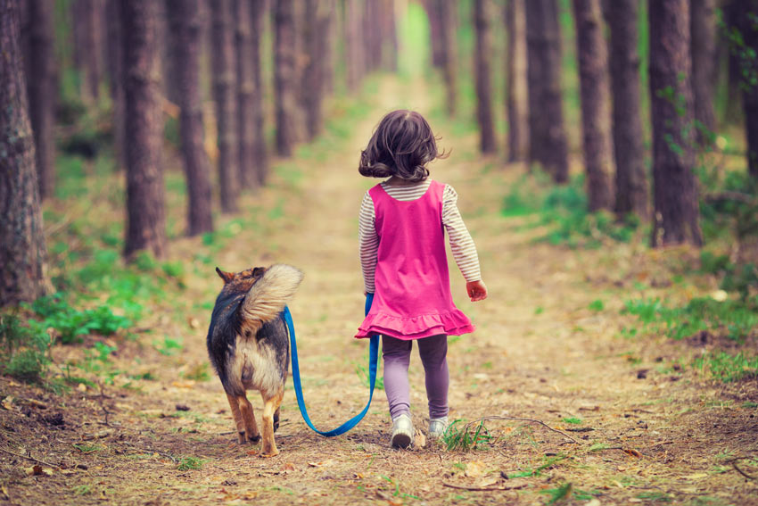 A young girl taking her obedient dog on a walk in the wood