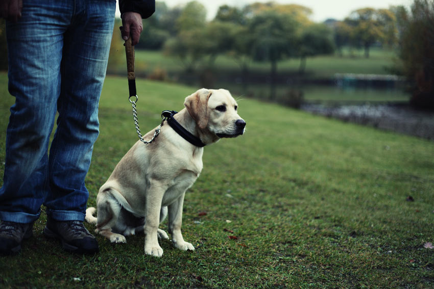Begin with your dog on the lead
