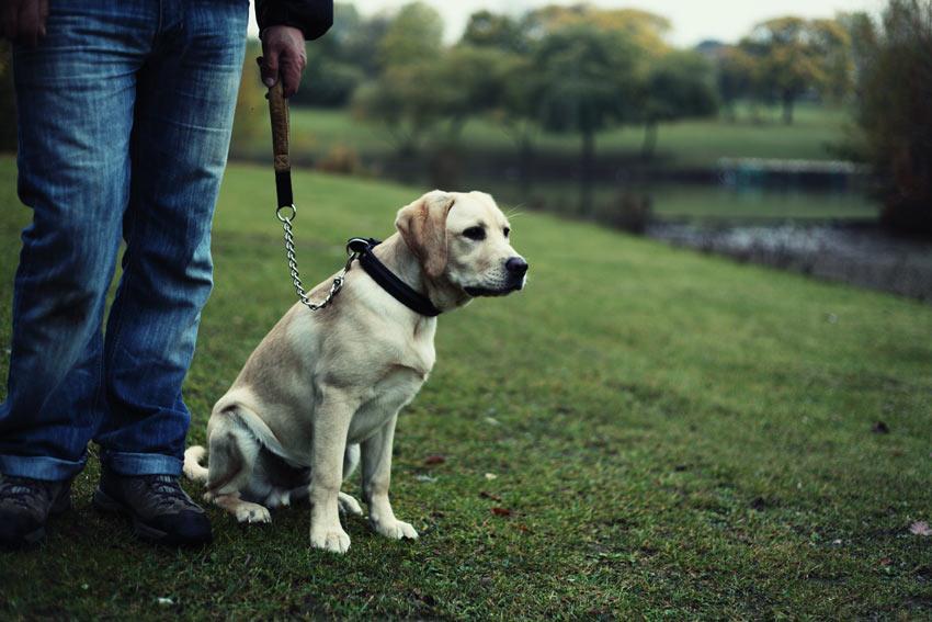 Börja träna med hunden i koppel