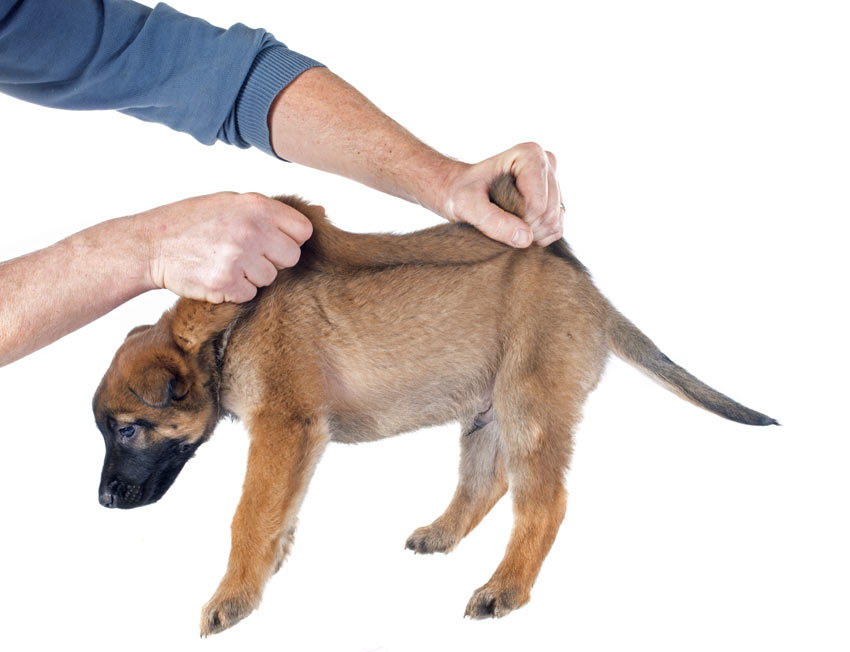 The Best Ways To Pick Up Your Dog Daily Care Of A Dog Dogs