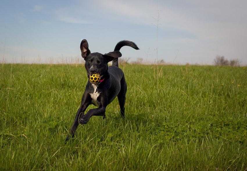 Letting a dog off the lead allows him to get more exercise