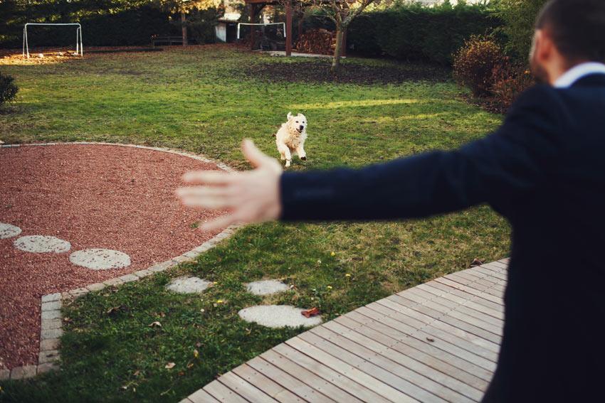 Öppna dina armar och använd en glad röst för att uppmuntra din hund att komma tillbaka