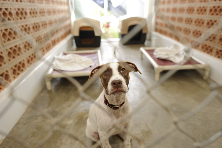 Dog Kennels vacation