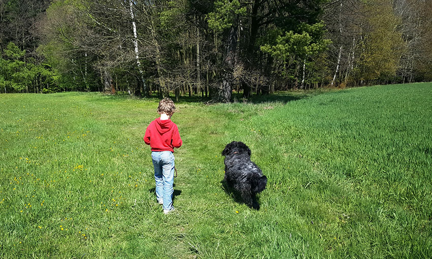 Dog and boy on dog walk in countryside