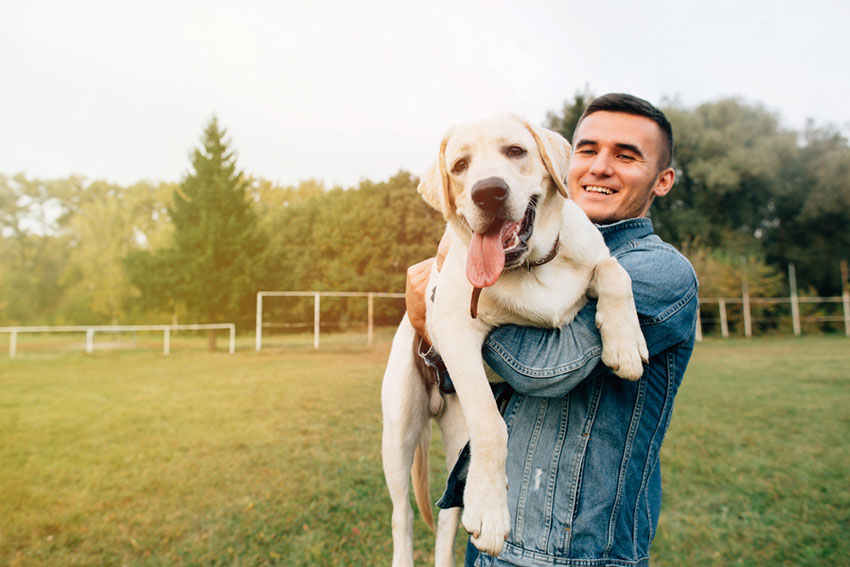 Dog being lifted man holding a labrador