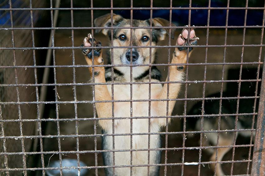 Dog rescue dog shelter adopt a dog