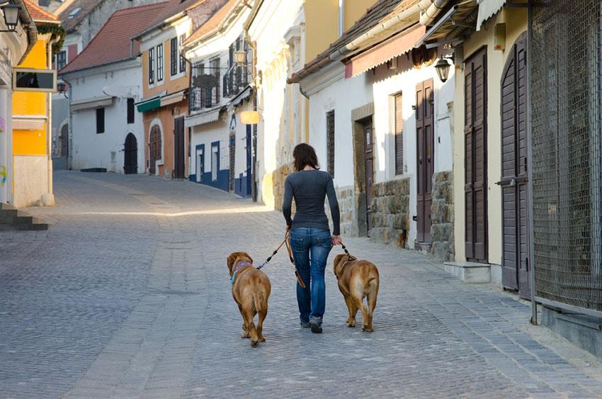 Dog training walking heel
