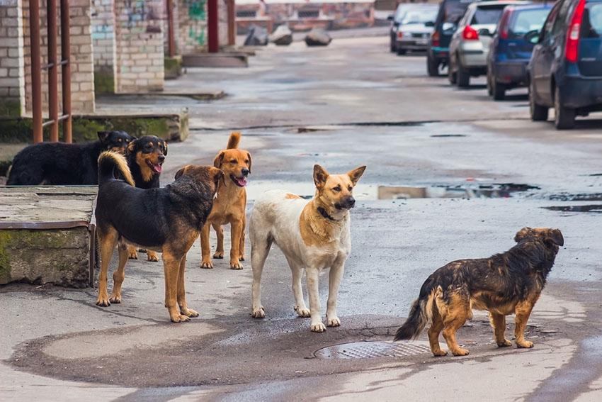 Dogs stray street dog