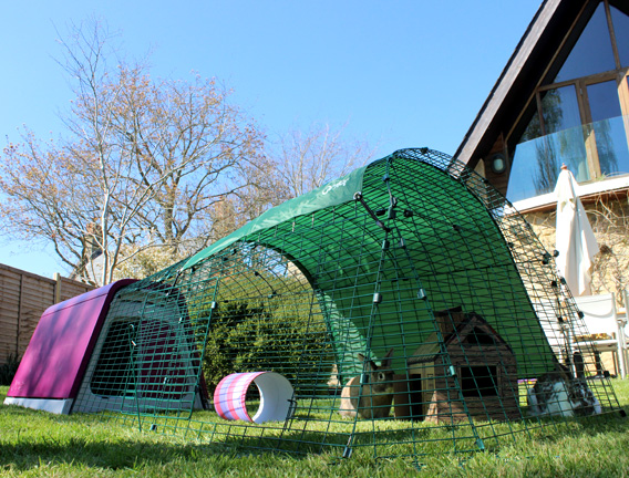 The Eglu Go Rabbit House in a garden