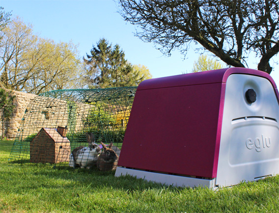 Rabbits sitting in the Eglu Go Hutch rabbit run