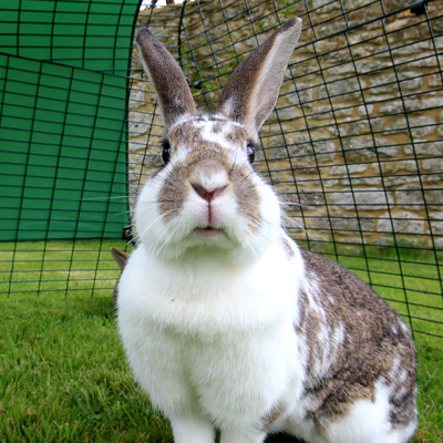 Un conejo feliz en el corral para conejos