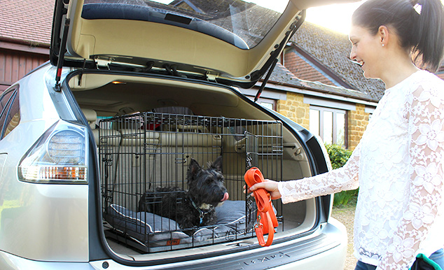 Using a dog crate is the safest way to transport your dog on car journeys