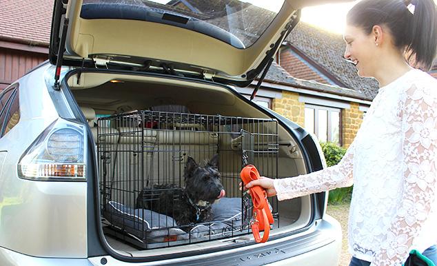 Att använda en bur är det säkraste sättet att transportera din hund