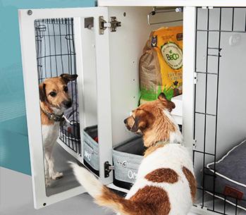 W lustrze Fido Studio Twój zwierzak zawsze znajdzie przyjaznego kompana