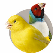 Finch and Canary Guide
