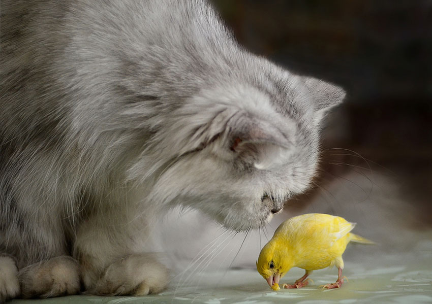 cats and pet birds