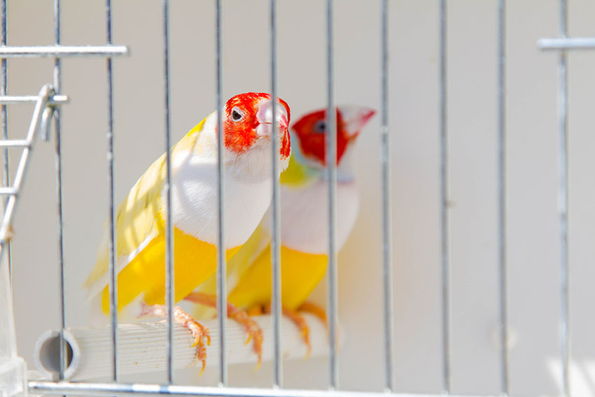 Fume hazards are a pet bird's worst enemy