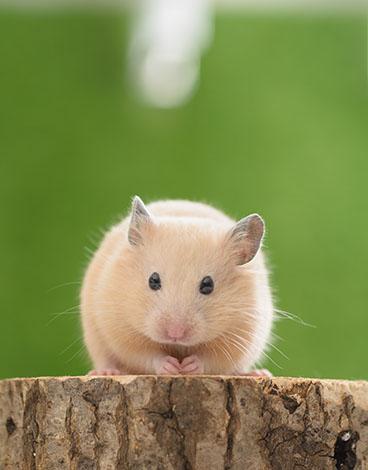 hamster biting