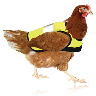 High-Vis Chicken Vest