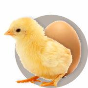 Guide sur l'incubation