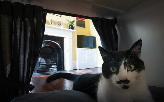 En katt njuter av kattsängen Maya Nook med gardiner i bakgrunden